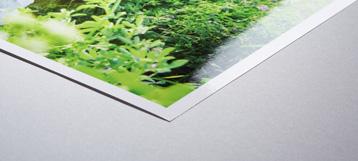 silver halide photo print